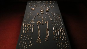Pieces of a skeleton of Homo naledi -NYT photo
