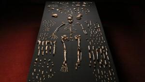 Pieces of a skeleton of Homo naledi -NYT photo