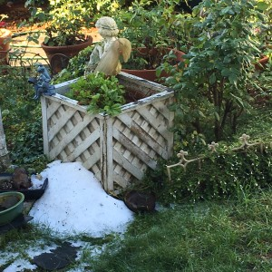 'Snow' in my Bay Area back yard this week